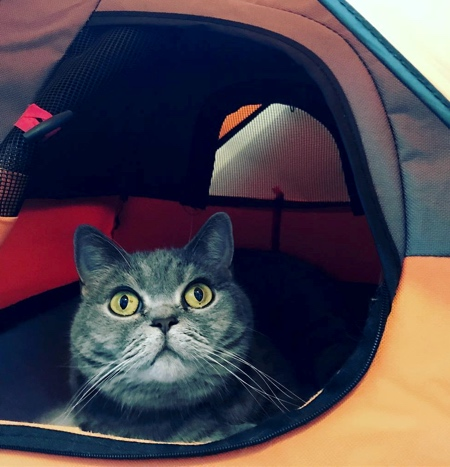 Camping Tent for Cats
