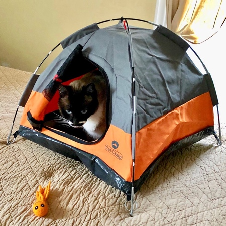 Tent for Cats