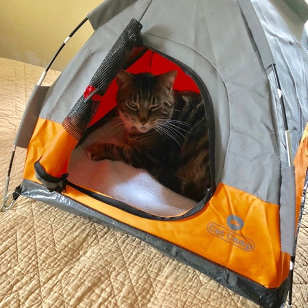 ea6e501f77 Camping Tents for Cats