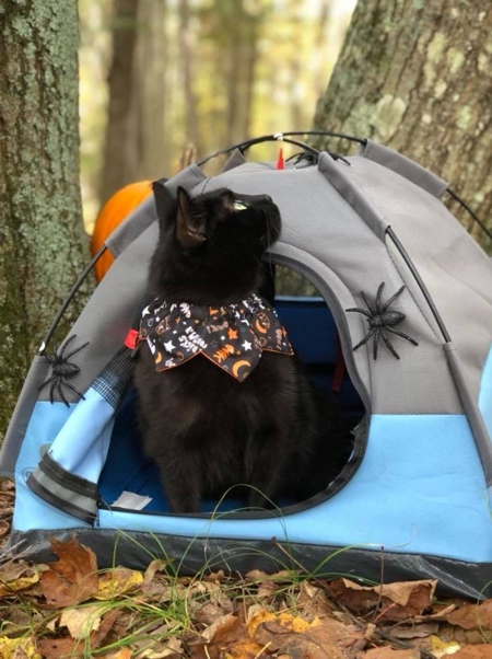 Cats Camping Tent