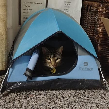 Cat Camping Tent