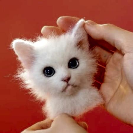 3D Realistic Cat Portrait