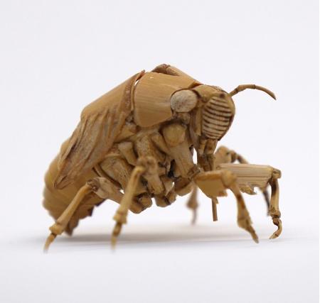 Noriyuki Saitoh Insects