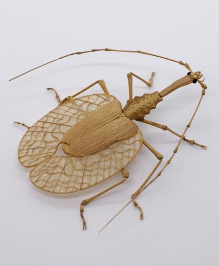 Noriyuki Saitoh Insect