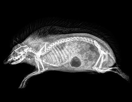Oregon Zoo Animal XRays