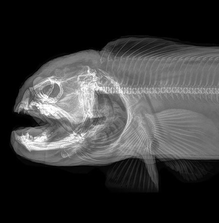 Oregon Zoo Animal XRay