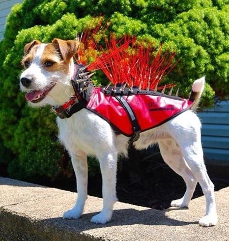 Dog Body Armor