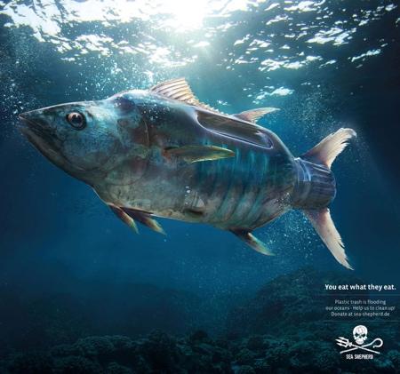 Sea Shepherd You Eat What They Eat