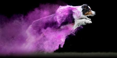 Powder Dogs