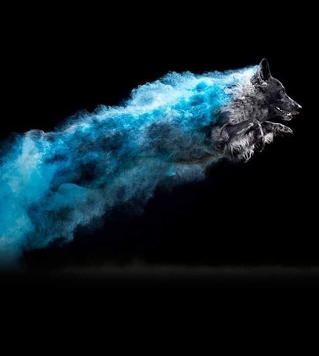 Colored Powder Dogs