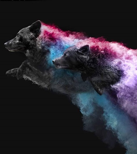 Coloured Powder Dogs
