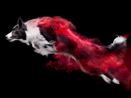 Jess Bell Powder Dogs