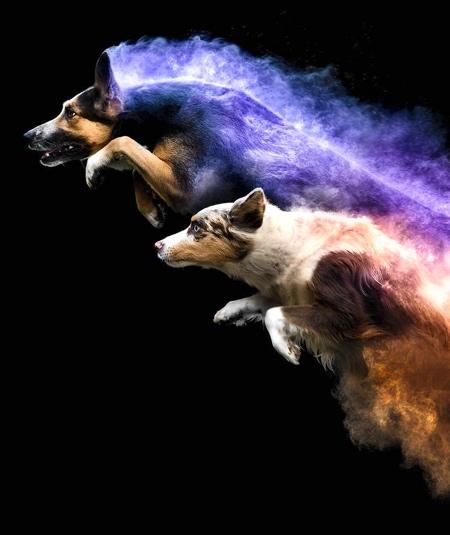Jess Bell Dogs
