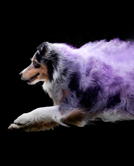 Jess Bell Powder Dog
