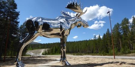 Mirror Moose