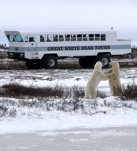 Polar Rover