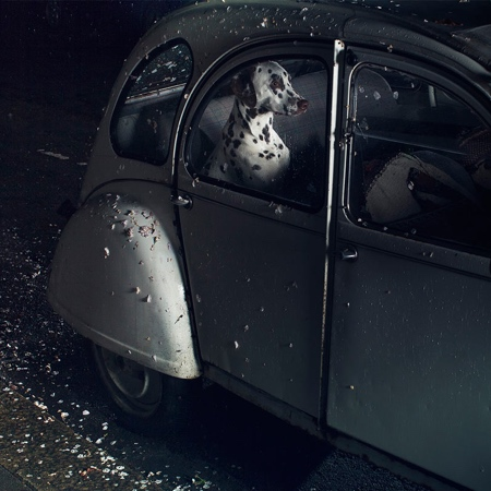 Mute The Silence of Dogs in Cars