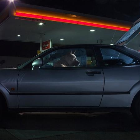 Martin Usborne Dogs in Cars