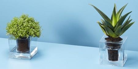 Transparent Planter