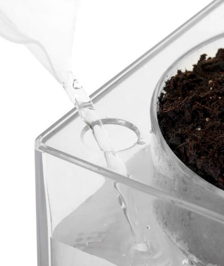 Clear Planter