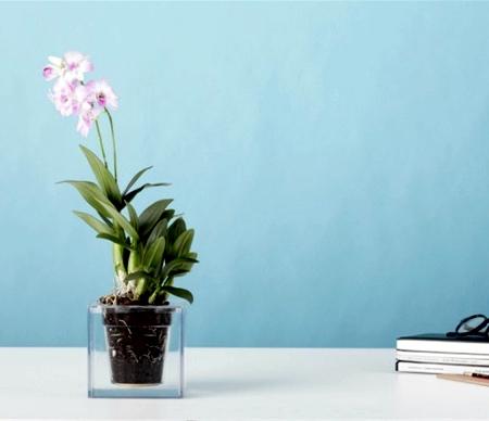 Boskke Transparent Planter