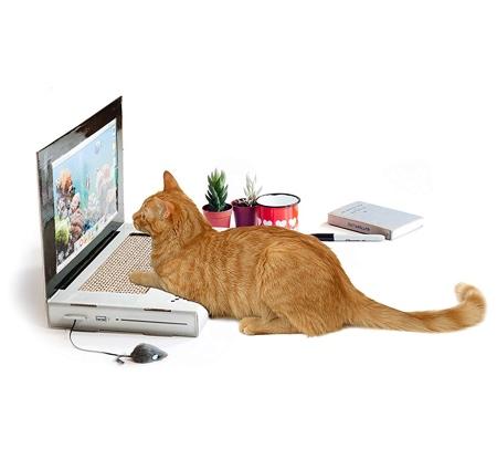 Cat Scratching Laptop