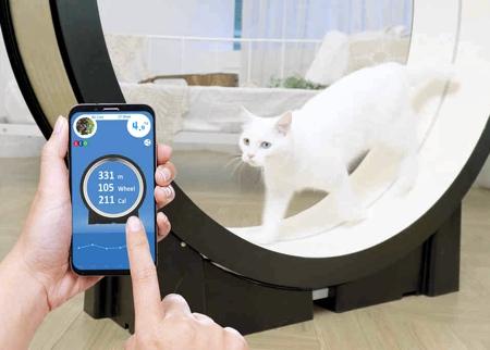Treadmill Cat