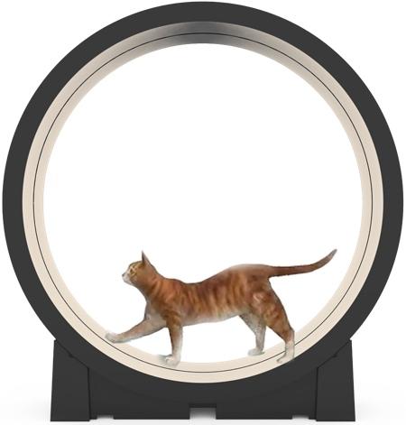 Treadmill for Cat