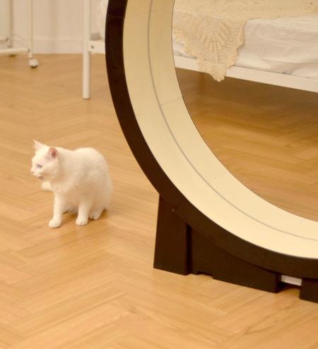 Cats Treadmill