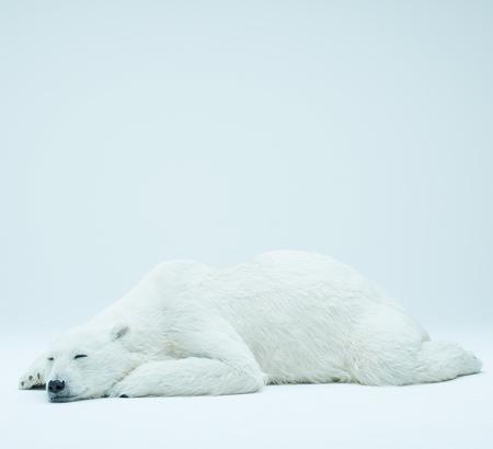 Polar Bear Toys