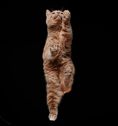 Photos of Cats from Underneath