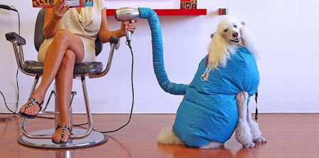 Dog Dryer