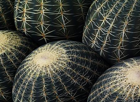 Cerruti Baleri Cactus Sofa