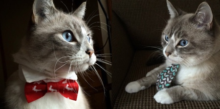 Cat Neckties and Bows