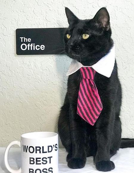 Cat Necktie