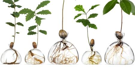 Transparent Vases