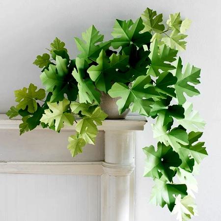 Corrie Beth Hogg Plants