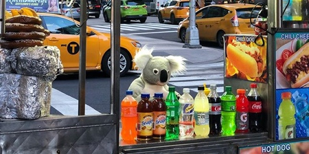 Koalas in New York