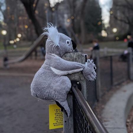 Koalas in NYC