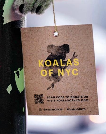Koalas of NYC
