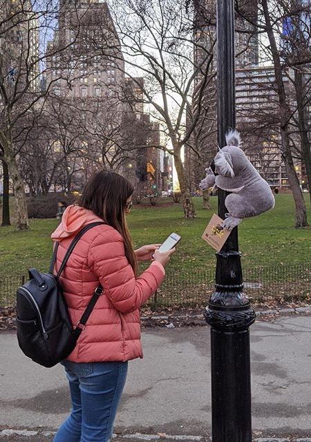 Koala in New York