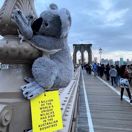 Koala Toys in New York