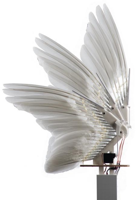 Pigeon Bot