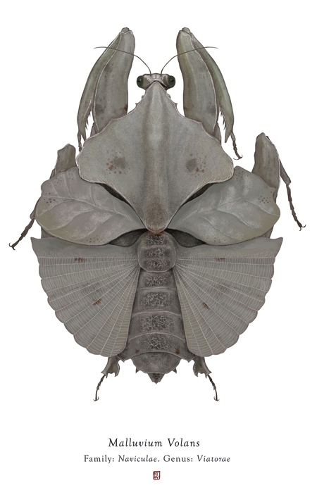 Richard Wilkinson Bug