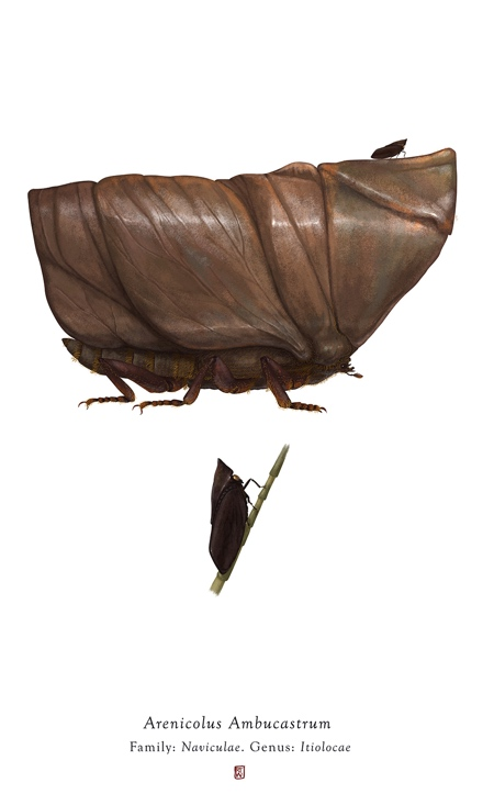 Richard Wilkinson Insect