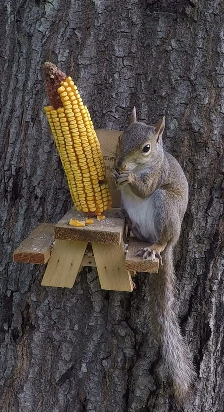 Squirrel Feeder Picnic Table