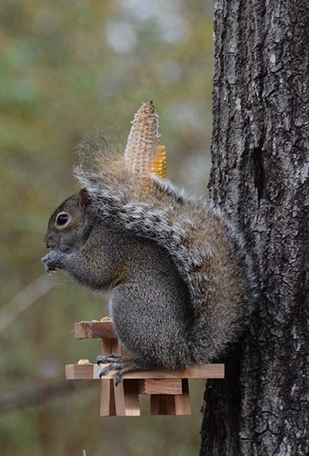 Squirrel Feeder Table