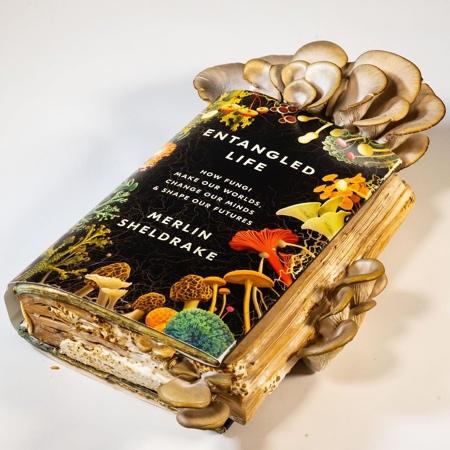 Merlin Sheldrake Mushroom Book