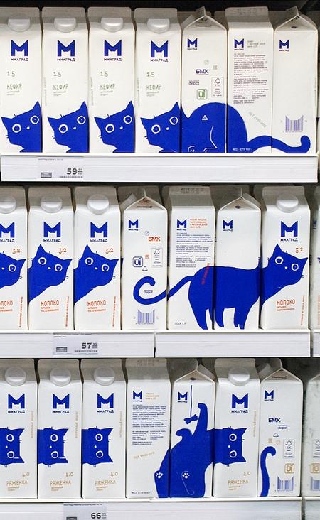 شبح گربه های آبی