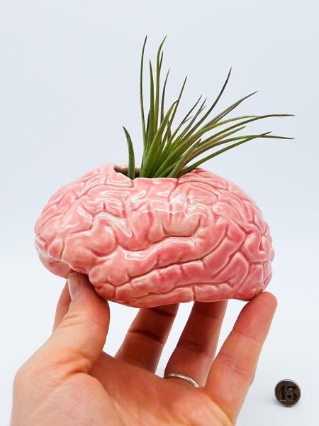 Human Brain Planter